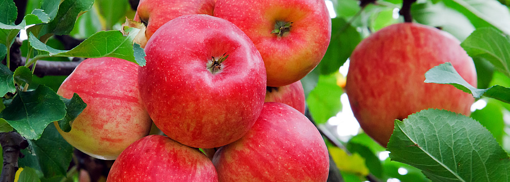 04-red_apples.jpg